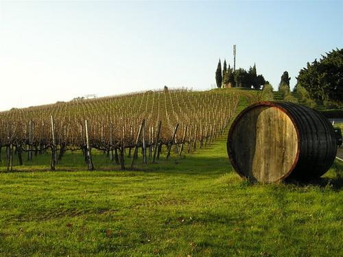 ital_vinyards