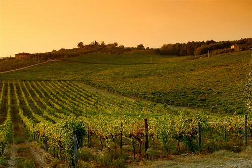 tramonto_vigna_chianti